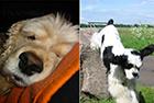 Bild 1 Hundeschule & Hunde- und Katzenhotel FIRST CLASS am Kiekutsee R. Lütjohann