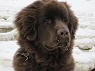 Bild 2 Hundeschule & Hunde- und Katzenhotel FIRST CLASS am Kiekutsee R. Lütjohann