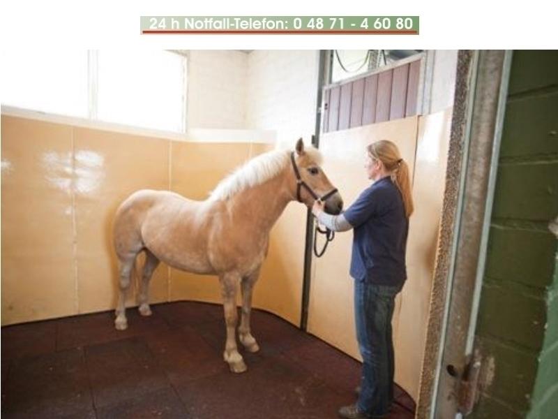 Tierärztliche Klinik f. Pferde u. Pferdezahnheilkunde Dr.med.vet. Jörg Peter Belz
